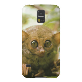 Oceania, Indonesia, Sulawesi. Tarsier tarsius Cases For Galaxy S5