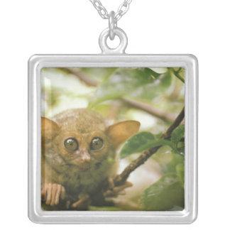 Oceania, Indonesia, Sulawesi. Tarsier tarsius Silver Plated Necklace