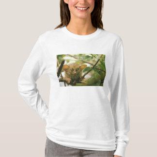 Oceania, Indonesia, Sulawesi. Tarsier tarsius T-Shirt