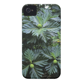 Oceania South Pacific French Polynesia Blackberry Bold Cover