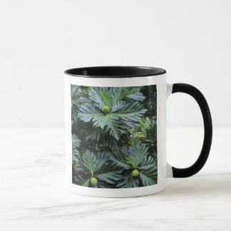 Oceania, South Pacific, French Polynesia, Mug