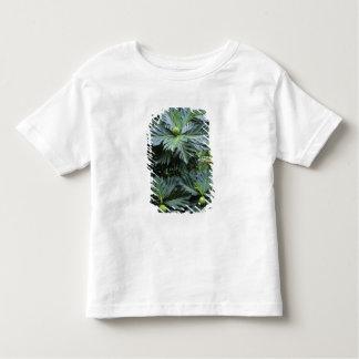 Oceania, South Pacific, French Polynesia, Tshirts