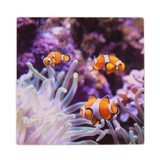Ocellaris Clownfish | Amphiprion Ocellaris Wood Coaster