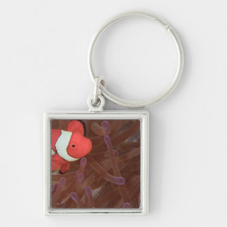 Ocellated Anemonefish Amphiprion ocellaris) Silver-Colored Square Key Ring