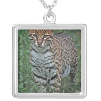 OCELOT Leopardus pardalis) CENTRAL AMERICA Silver Plated Necklace