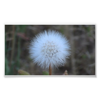 Ochoco Black Canyon Flora Flower Botany Wildflower Photo Print