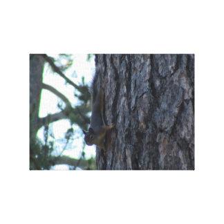 Ochoco Black Canyon Mammal Animal Squirrel Stretched Canvas Print