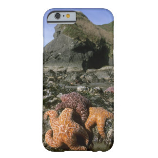 Ochre Seastars Pisaster ochraceous) Shi-Shi Barely There iPhone 6 Case