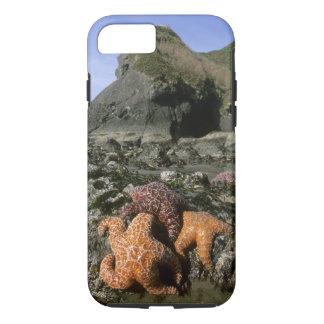 Ochre Seastars Pisaster ochraceous) Shi-Shi iPhone 8/7 Case