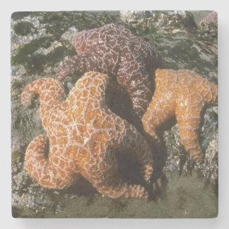 Ochre Seastars Pisaster ochraceous) Shi-Shi Stone Coaster