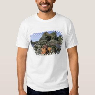 Ochre Seastars Pisaster ochraceous) Shi-Shi Tshirt