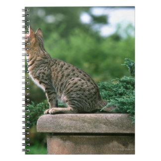 Ocicat 2 notebook