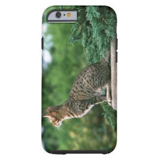 Ocicat 2 tough iPhone 6 case