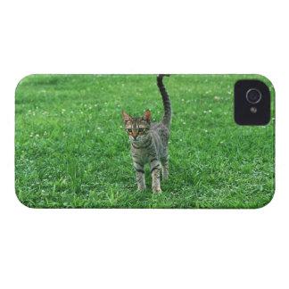 Ocicat 3 iPhone 4 cover
