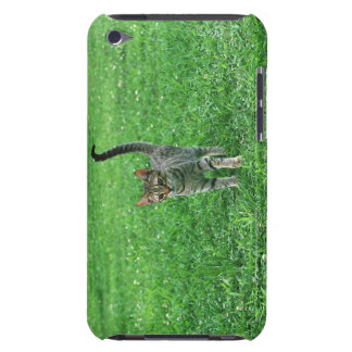 Ocicat 3 iPod touch covers