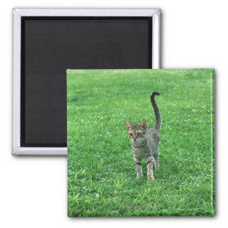 Ocicat 3 square magnet