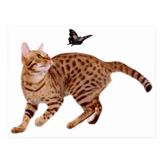 Ocicat Cat & Butterfly Post Card