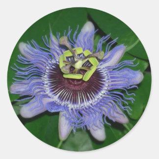 Ocoee flower Passiflora caerulea Passion flower Round Sticker