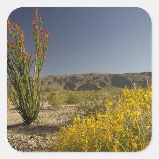 Ocotillo and desert senna square sticker