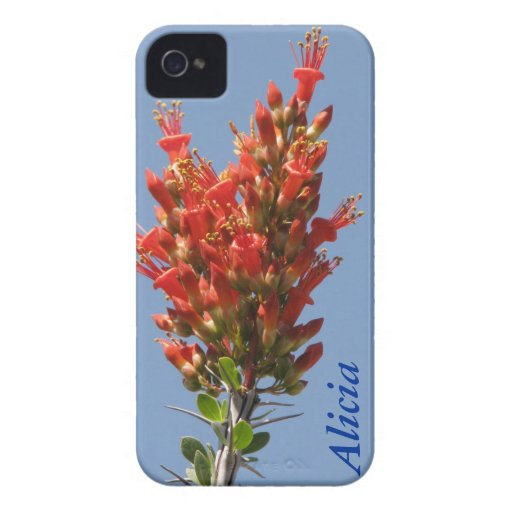 Ocotillo Plant Case-Mate iPhone 4 Cases