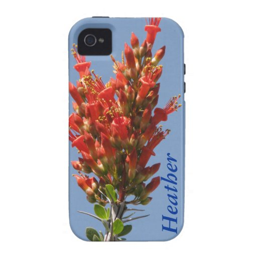 Ocotillo Plant Case-Mate iPhone 4 Covers
