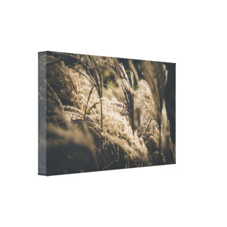 October plumes canvas print