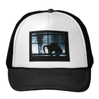 October Showers Cat Silhouette At Window 2 Blue Cap