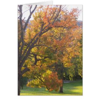 October sugar maple greeting card