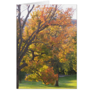 October sugar maple greeting card