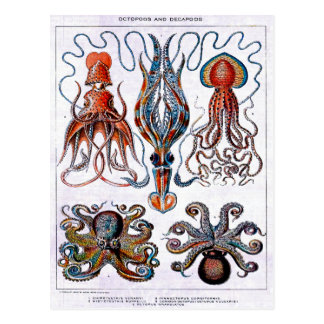 Octopus Educational Plate Postcard