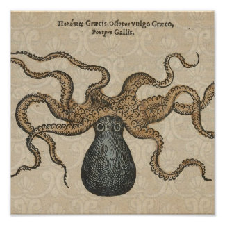 Octopus Kraken vintage scientific illustration Poster
