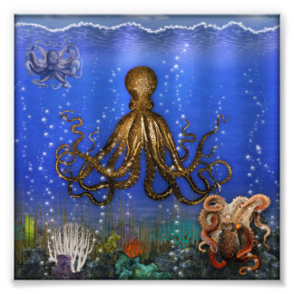 Octopus' Lair - Colorful Photograph