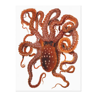 Octopus Macropus Atlantic White Spotted Octopus Canvas Prints