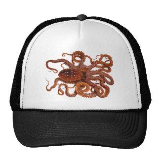 Octopus Macropus Atlantic White Spotted Octopus Hats