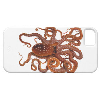 Octopus Macropus Atlantic White Spotted Octopus iPhone 5 Case