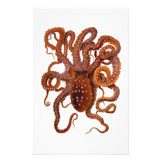 Octopus Macropus Atlantic White Spotted Octopus Stationery