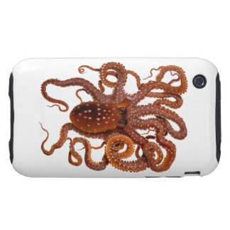 Octopus Macropus Atlantic White Spotted Octopus Tough iPhone 3 Covers