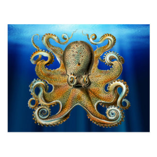 Octopus Postcards