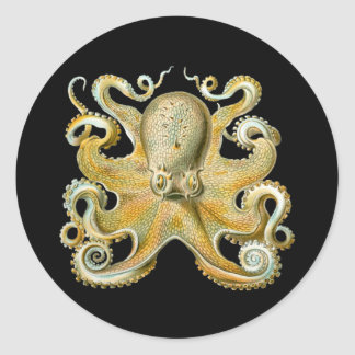 Octopus Round Sticker