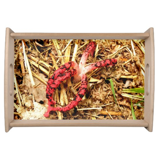 Octopus Stinkhorn Serving Tray