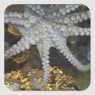Octopus with Exposed Suction Cup Tentacles Square Sticker