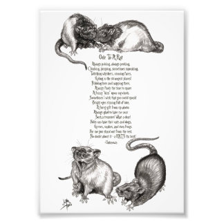 Ode to a Rat Photo Print