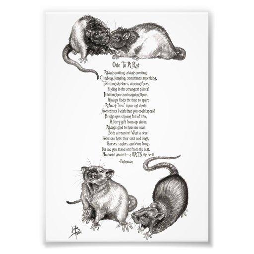 Ode to a Rat Photo Print
