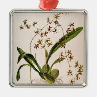 Odontoglossum Hastatum Christmas Ornament