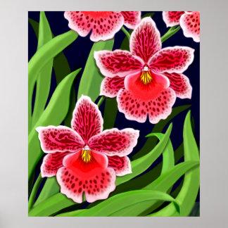 Odontoglossum Orchids Poster