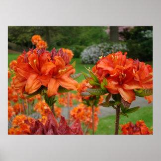 OFFICE ART PRINTS AZALEAS 25 Orange Azalea Garden Posters