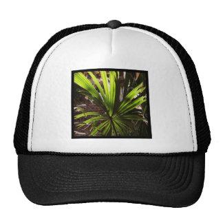 Official BLLR PALM Fundraising Merchandise Hats