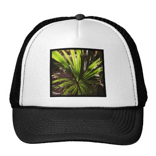 "Official BLLR ""PALM"" Fundraising Merchandise! Hats"
