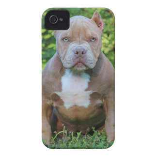 Official ROCK CITY KENNELS IPHONE4 Case