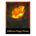 Ogange California Flower